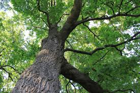 the giving tree paula m de angelis photography