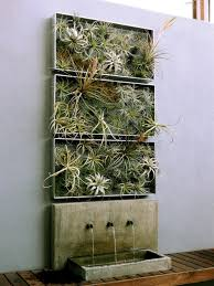 home decor ideas plants air plant airplantman living walls