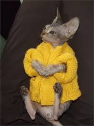 sweaters for cats cats in sweaters so