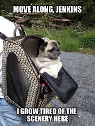 Funny Pug Memes - 35 very funny animal pictures funny animal pictures funny