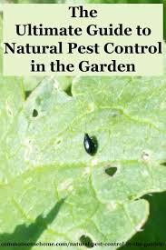 How To Keep Pests Away From Garden - garden pests jpg