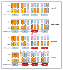 genetic mutations lessons tes teach