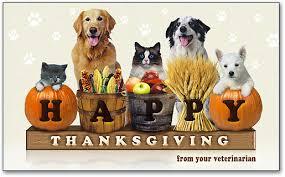 cat thanksgiving 3 up laser card smartpractice veterinary