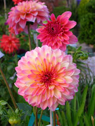 awesome looking flowers the 25 best morning flowers ideas on pinterest sunset