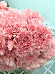 carnations in bulk 37 best flowers images on fresh flowers cut flowers