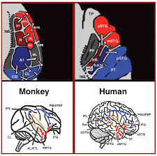 from where to what a neuroanatomically based evolutionary model