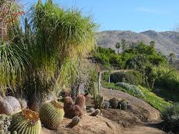 Ucr Botanical Gardens Of California Riverside Botanic Garden