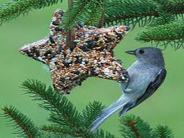 how to repairs great bird seed ornaments how to make bird seed