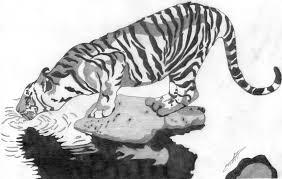 tiger sketch by melski83 on deviantart