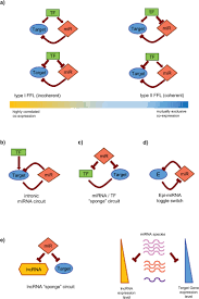 microrna mediated regulatory circuits outlook and perspectives