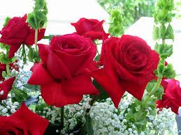 roses flowers roses flowers 1920x1440