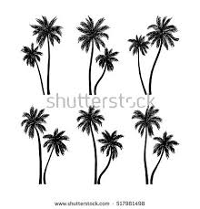 vector illustration palm trees stock vector 517981498