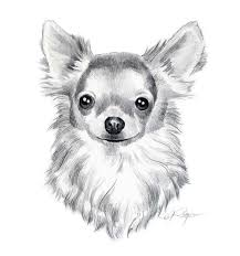 drawings of dogs long coat chihuahua dog pencil drawing art