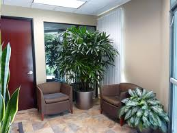 Office Plants by Office Plants And Light Requirements Envirogreenery Plants Ma
