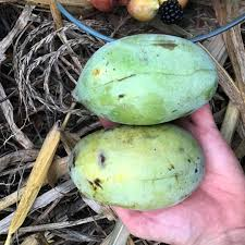 perennial power 5 fruit and nut trees you should plant this fall