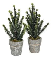 the white company mini potted spruce tree set of two