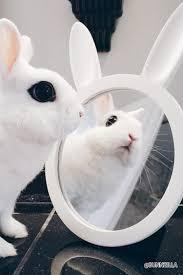 forever 21 matte bunny mirror cheap home decor online popsugar