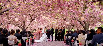Botanical Gardens Ticket Prices Patina Events Botanic Garden Wedding