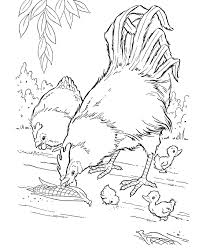 coloring page of a chicken free rooster pictures to print farm animal coloring pages
