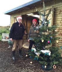 south west england christmas tree farms choose and cut christmas