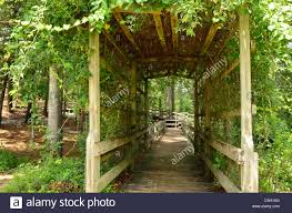 vine trellis stock photos u0026 vine trellis stock images alamy
