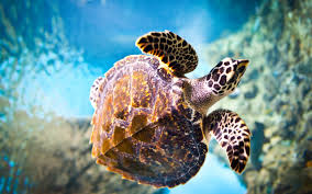 hd images turtle collection