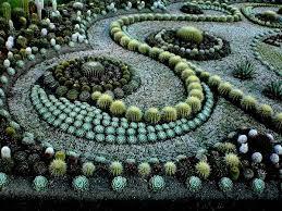 Cactus Garden Ideas Diy Cactus Garden Idea Backyards Garden Pinterest Cactus