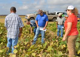 Pumpkin Patch St Louis Mo by Growers Learn Ways To Profit From Pumpkin Patches