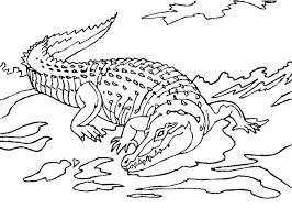 crocodile waiting for his prey in the water colouring page fun