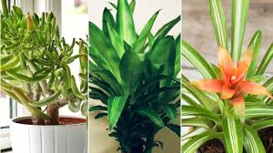 indor plants air purifying indoor plants health com health