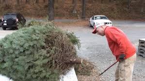 how do christmas trees grow