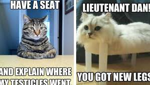 Take A Seat Meme - literally 51 cat memes to take over your screen and day
