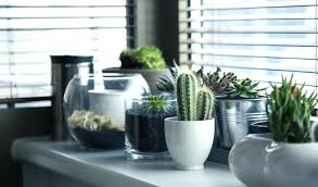 office design decorative plants for office decorative plants for