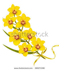 Yellow Orchid Free Stock Photo Of Yellow Orchid Flowers Growing At Duke Farms