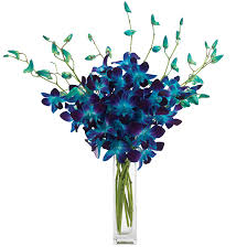 blue dendrobium orchids blue dendrobium orchids dyed flowers delivery calyx flowers