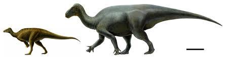 2010 11 01 Archive Iguanacolossus Pictures U0026 Facts Dinosaur Database