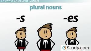 adjective agreement in spanish grammar video u0026 lesson transcript
