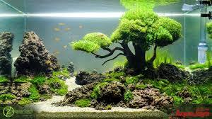 Takashi Amano Aquascaping Techniques Descubre Los Increíbles Jardines Acuáticos De Takashi Amano
