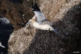 it u0027s a time of change on scotland u0027s cliffs scottish nature notes
