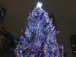 chicago tree lighting 2017 grayslake family s spruce wins chicago christmas tree contest