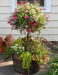 Best Flowers For Small Pots Basket Column Photo Gallery Baby Pinterest Columns Photo