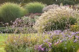 miscanthus sinensis morning light maiden grass