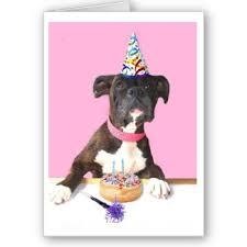 boxer dog meme happy birthday boxer dog boxer dogs pinterest dog happy