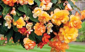 flowers plants shrubs thompson