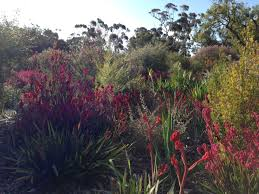 australian native plants perth native and exotic styles at kings park perth u2013 janna schreier