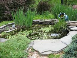 plants easy simple landscaping ideas