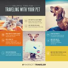 traveling tips images Tips for traveling with your pet lemonly infographics jpg