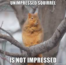 Unimpressed Meme - unimpressed squirrel memes