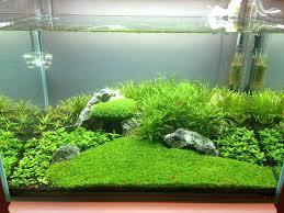 non fish aquarium fish aquarium store u2013 aquara info