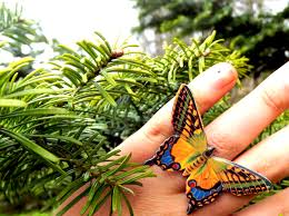 colourful butterfly ring butterfly ring colourful wing wing
